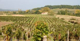 Côtes de Castillon et côtes de francs